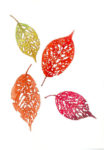 絵はがき 桜の虫食い葉