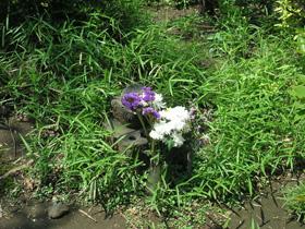 こんな小さな石にもきれいな花が供えられています