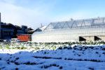 雪の白菜畑
