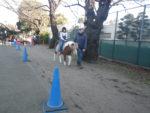 碑文谷公園。子どもはポニーに乗ることができる