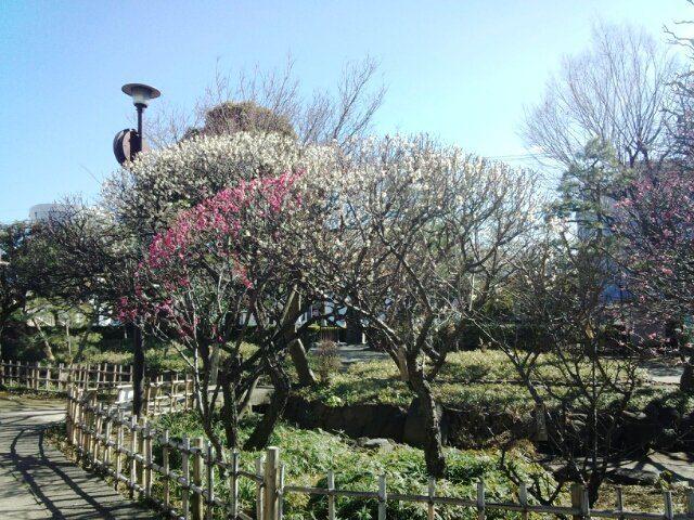 蒲田梅屋敷公園