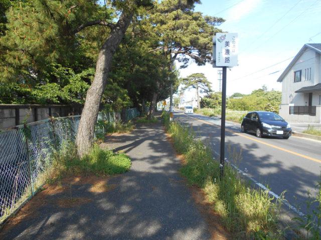 垂井から大垣へ向かう道沿いの松並木。美濃路では唯一ここに残る