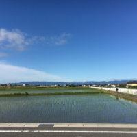 美濃路 須賀駅近くの水田地帯
