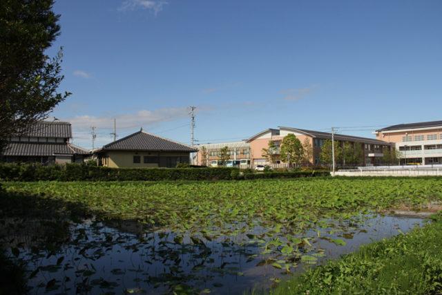 羽島市は、ハスが名産です。美濃路沿いでも多くの蓮田を見ました。