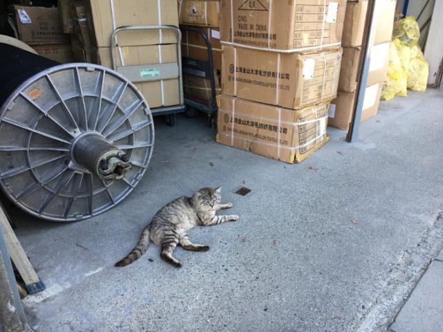 工場の前の猫。出荷用か輸入してきた材料の箱が積み上がっていました