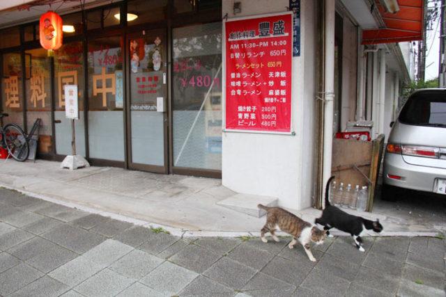 中華屋の前を連れ立っていく猫。熱田神宮公園を根城にしているのかもしれません。