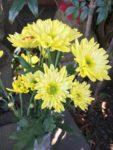 きれいなお花がお供えされていました