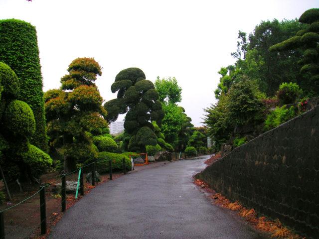 皆川園の前の大山街道。横浜市・川崎市市境付近。当時の道幅はこんなものだったという。
