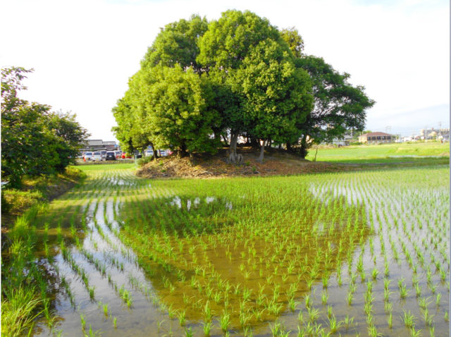 水田の中の神社