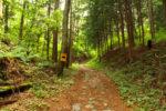 鳥居峠越えの道。石畳もある