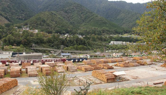 三殿貯木場。切りそろえられた材木が整然と並ぶ