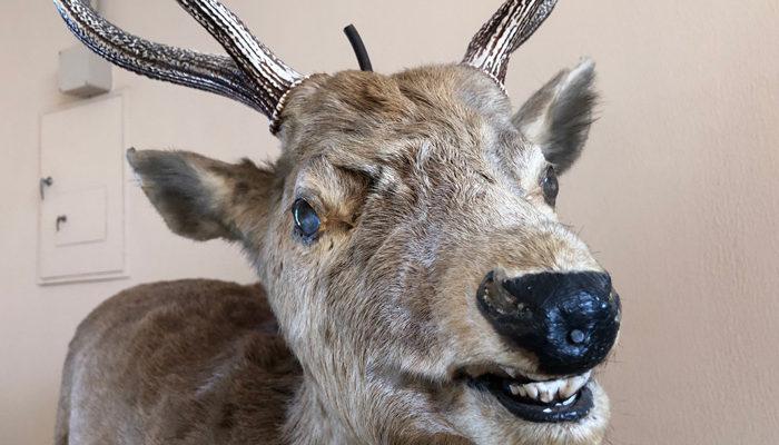 林業資料館は動物の剥製が豊富