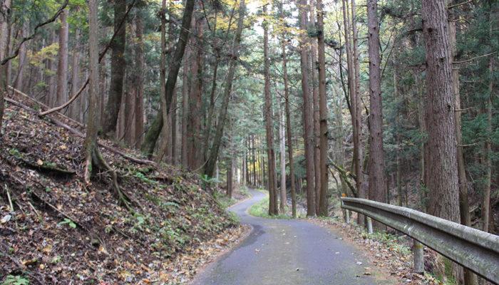 林道のようなすれ違いが厳しい県道254号